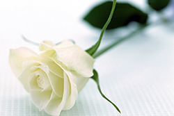 Memorial-Rose-Transfer-of-Deceased